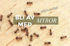 10 giftfria tips för att bli av med myror